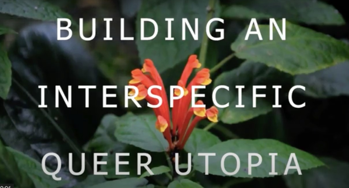 """The image shows the text """"Building An Interspeific Queer Utopia"""". In the background leaves and a yellow and red flower."""